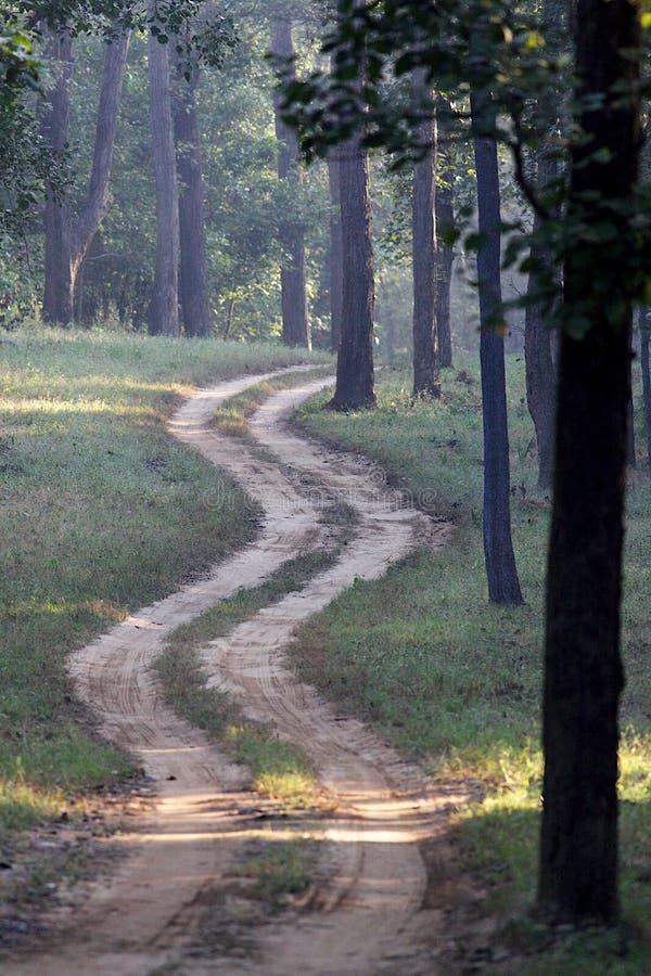 Windende Landweg in Indisch Tiger Reserve stock foto's