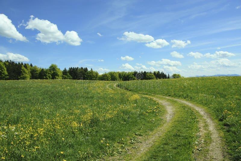 Windende manier in boterbloemenweide, blauwe hemel met wolken royalty-vrije stock foto