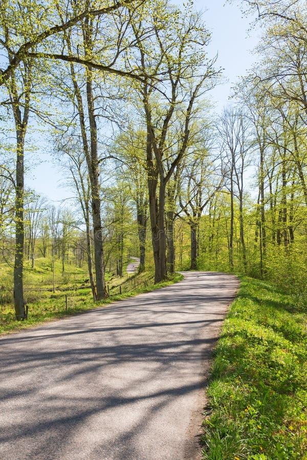 Windende weg in de lentebos stock foto