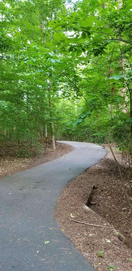 Windende weg door de Lentebomen met Hemel in het Noorden Georgia Mountains royalty-vrije stock foto