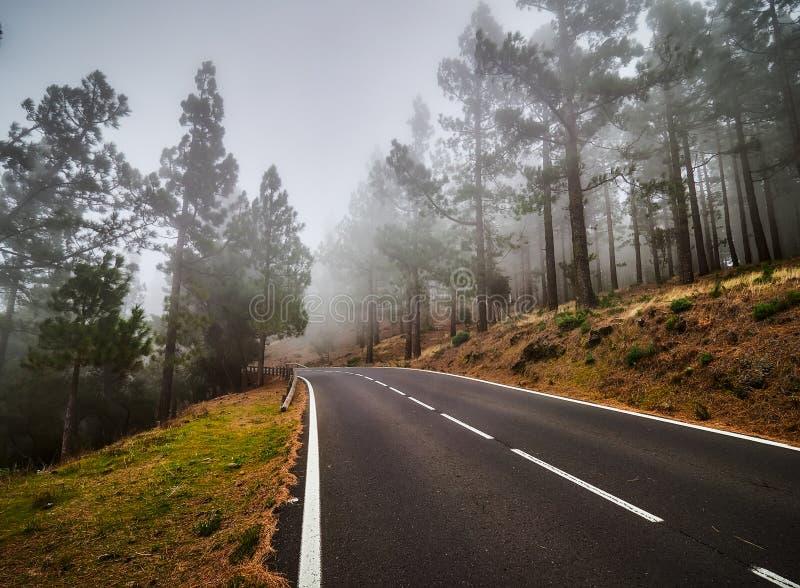 Windende weg im mist op het noorden van Tenerife Canarische Eilanden, Spanje stock afbeeldingen