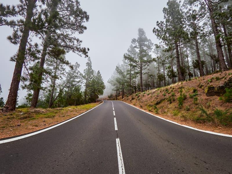 Windende weg im mist op het noorden van Tenerife Canarische Eilanden, Spanje royalty-vrije stock afbeelding