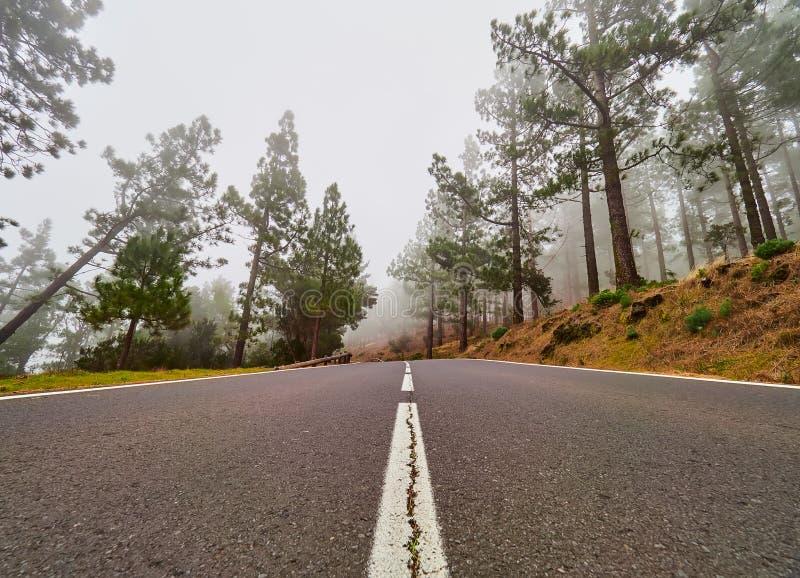 Windende weg im mist op het noorden van Tenerife Canarische Eilanden, Spanje royalty-vrije stock foto