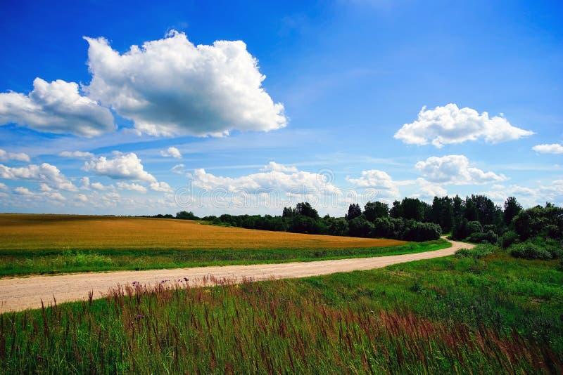 Windende weg op een gebied op een de zomerdag stock foto