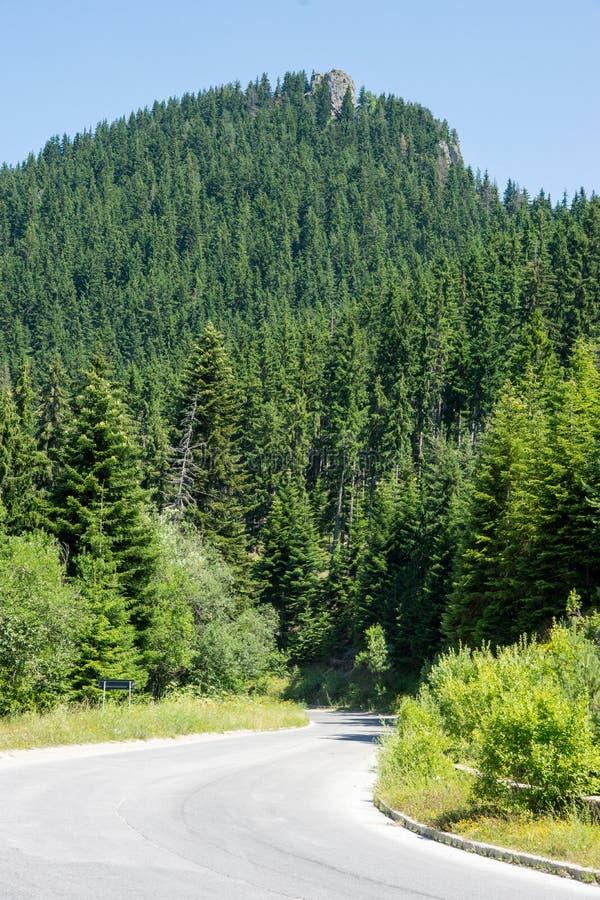 Windende weg in Rhodopes, Bulgarije royalty-vrije stock foto's