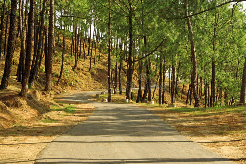 Windende wegen van het Himalayagebergte, India stock foto's