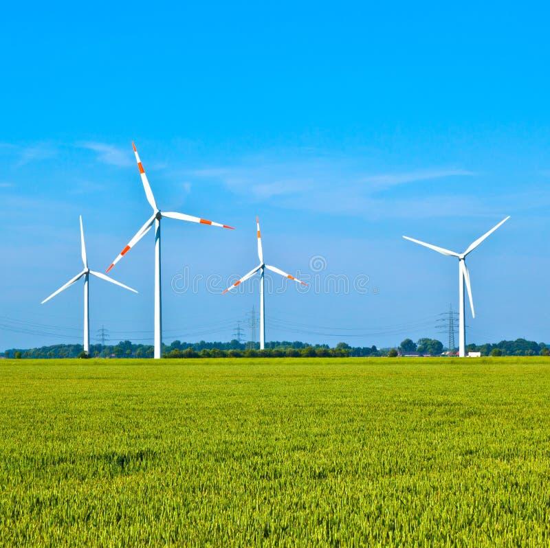 Windenergie wowers, die auf dem Gebiet stehen stockfoto