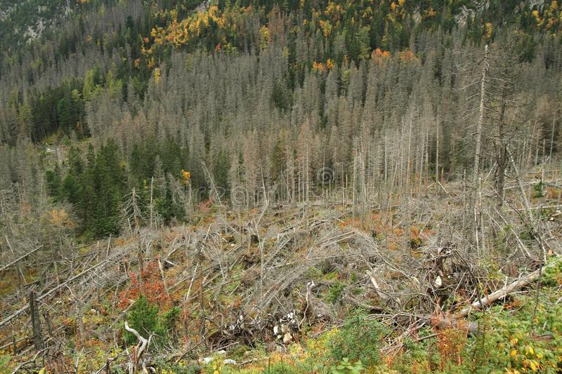 Download Windfall stock image. Image of natural, spruce, dead - 27568843