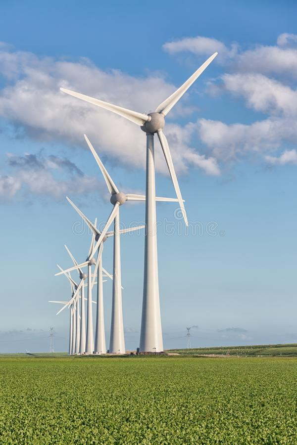 Windfarm in Dutch landscape with field of sugar beets. Windfarm in Dutch landscape with large field of sugar beets stock image