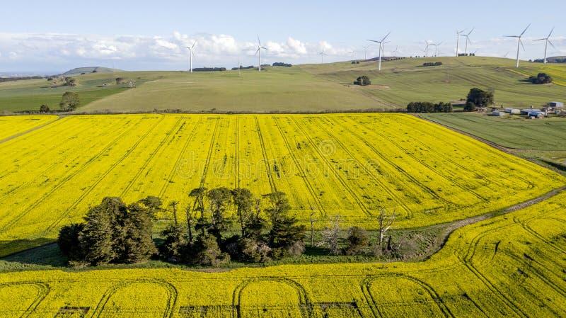 Windfarm op canolagebied 03 royalty-vrije stock foto