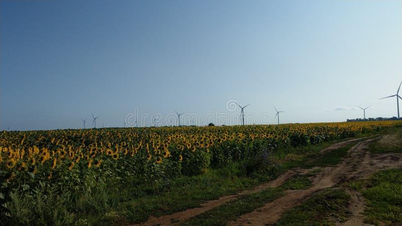Windgenerators op het gebied stock fotografie