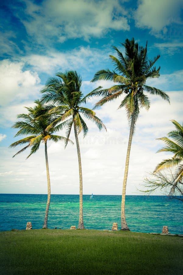 Windige Palmen stockbild