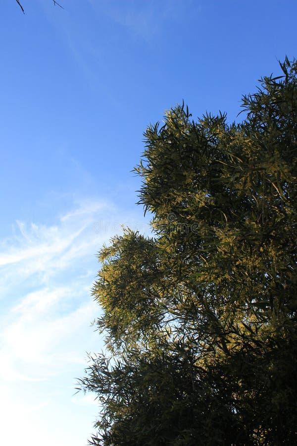 Windiger Baum lizenzfreie stockfotografie