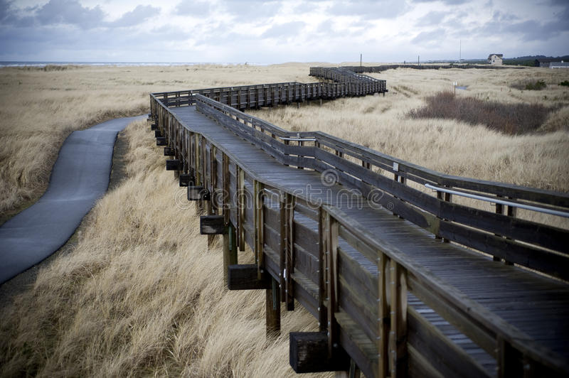 Winding boardwalk through tall grass royalty free stock photography
