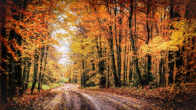 Forest Drive in Autumn. The Covered Road in Michigan`s Houghton County. royalty free stock images