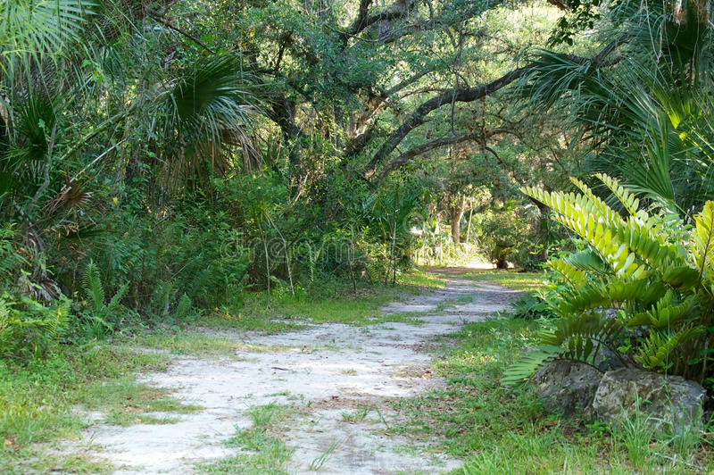 Download Winding dirt road stock photo. Image of road, grass, palm - 37986402