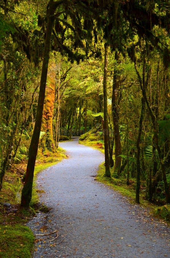 Winding Forest Walk, Lake Matheson, New Zealand royalty free stock photos