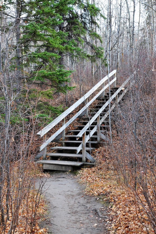 Winding hiking trail in forest stock photo