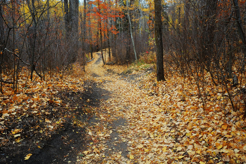Winding hiking trail in late autumn forest royalty free stock images
