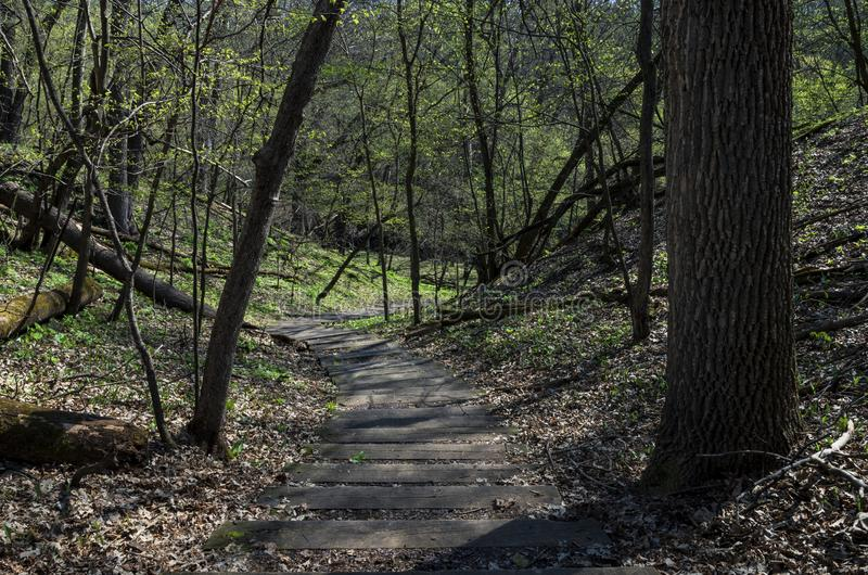 Winding Path Through Flandrau State Park Forest. Steps on winding trail through forested hills of flandrau state park in minnesota stock image