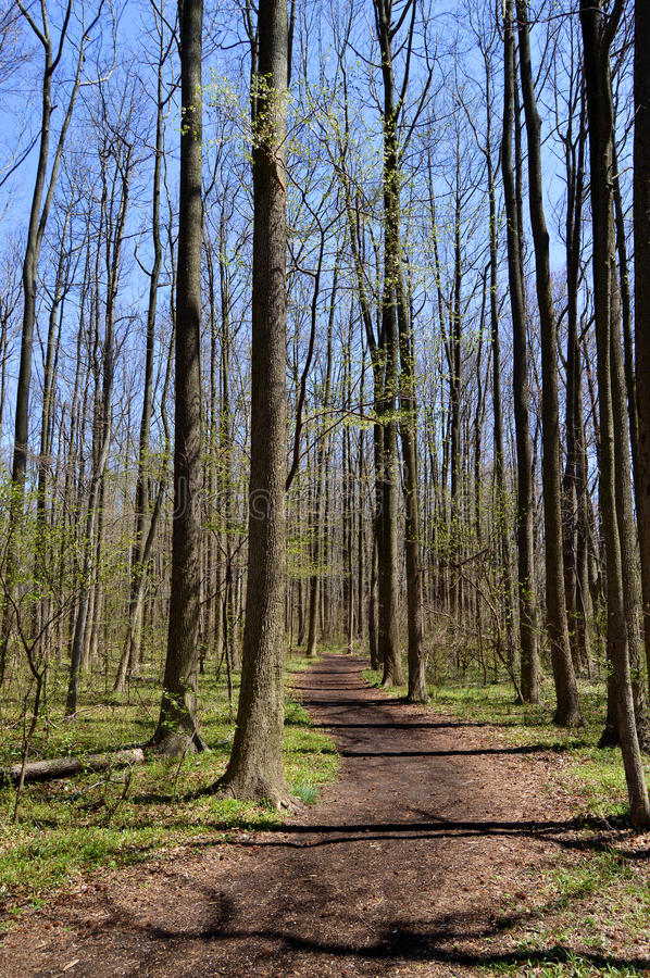 Winding path in forest royalty free stock photography