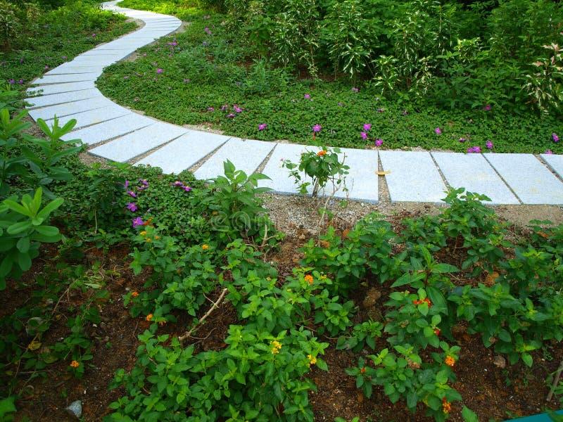 Winding Path in Garden stock photos