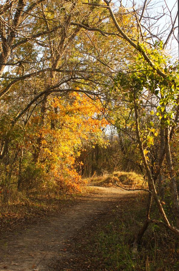 Winding path through late autumn woods at golden hour with shadows and sun shinning through leaves royalty free stock photography