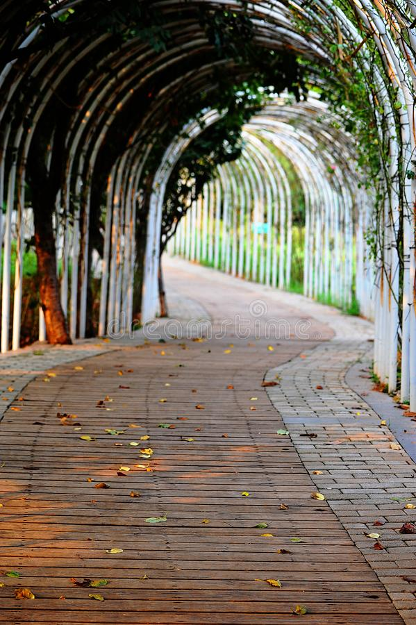 The road in the park. The winding path leads to a secluded quiet place.Park Road royalty free stock photo
