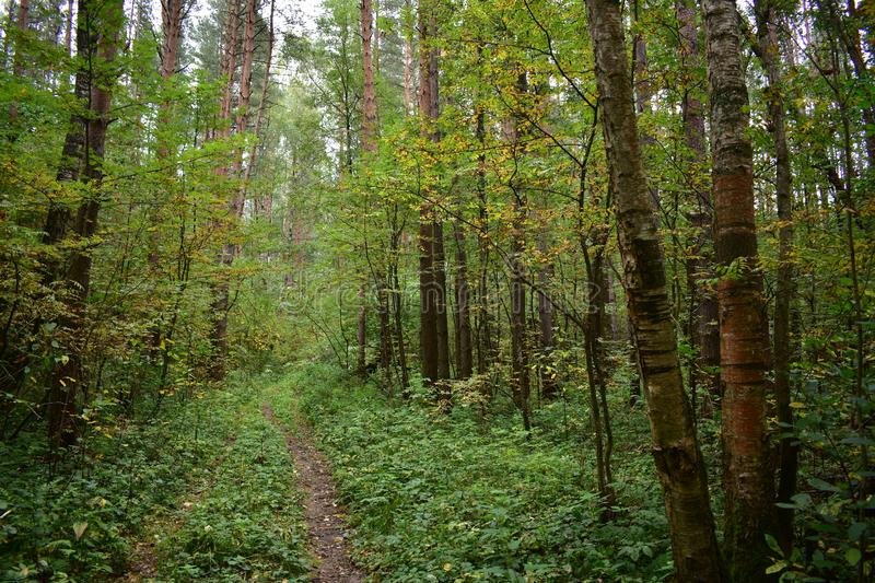 Winding path road path through pine birch deciduous forest between trees shrubs. And grass stock image