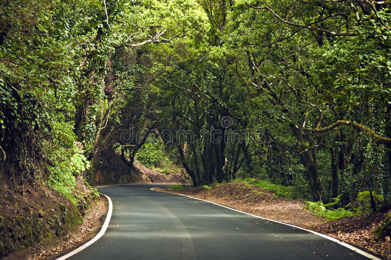 Download Winding road stock photo. Image of green, spain, shade - 21904790