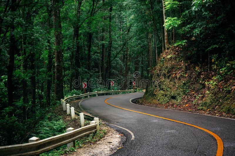 Winding road in Bohol, Philippines. Winding road through green Bilar Man-Made magic Forest, Bohol, Philippines stock image