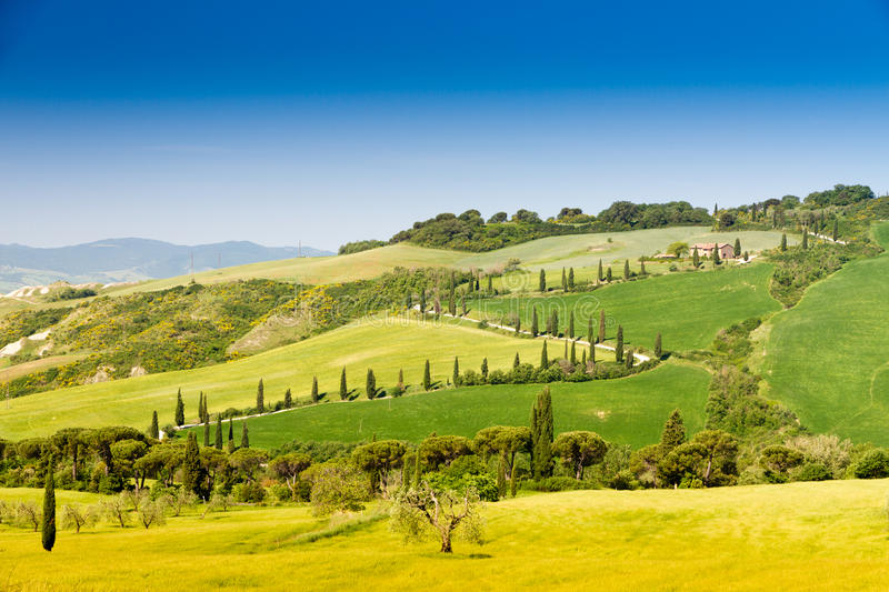 winding road flanked with cypresses in crete senesi Tuscany, Italy stock photo