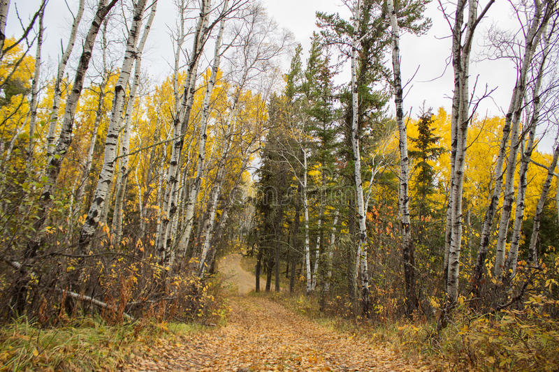 Download Winding Road Between Tall Fall Colored Trees Stock Photo - Image: 34574600