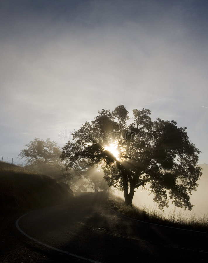 Free Winding Road Through Fog Stock Images - 2701934