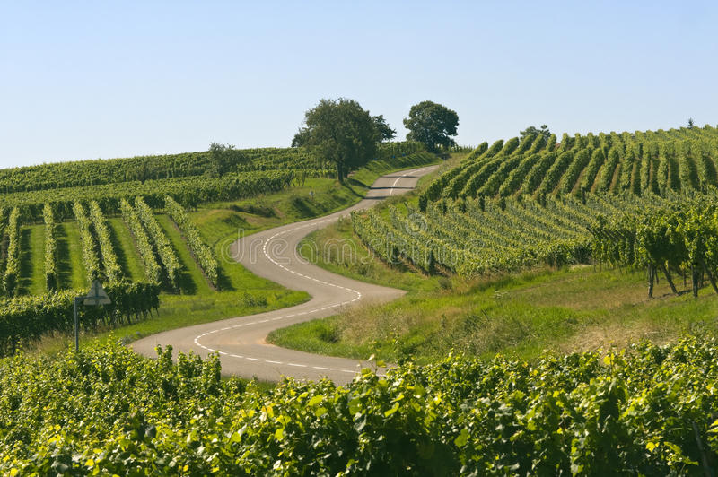 Download Winding Road In The Vineyards Of Alsace Stock Image - Image: 20427017