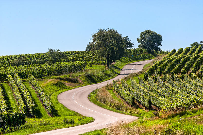 Winding road in the vineyards of Alsace royalty free stock images