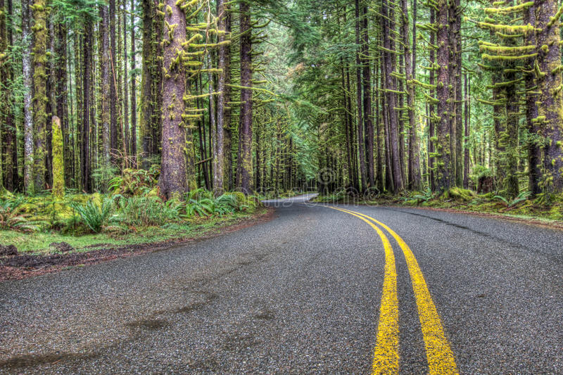 Winding Road In The Woods Royalty Free Stock Images