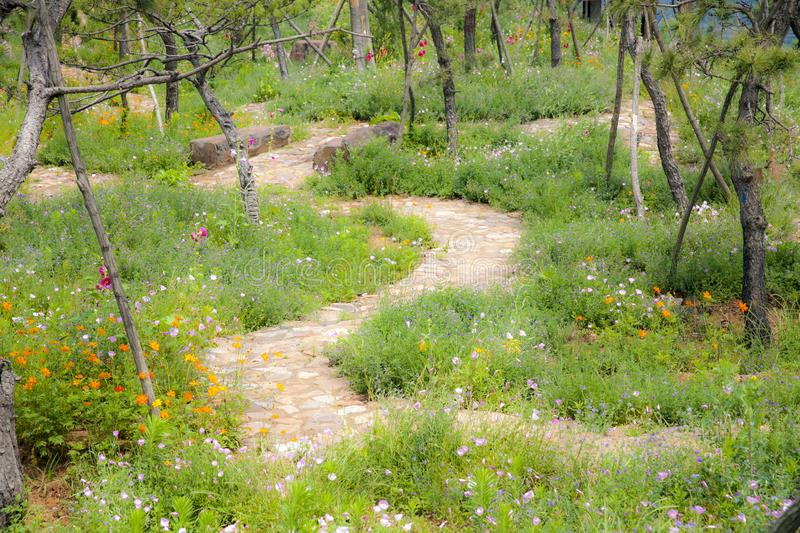 A winding stone path in the hilltop garden. A winding stone path runs through the pine garden at the top of the mountain like a fairyland royalty free stock photography