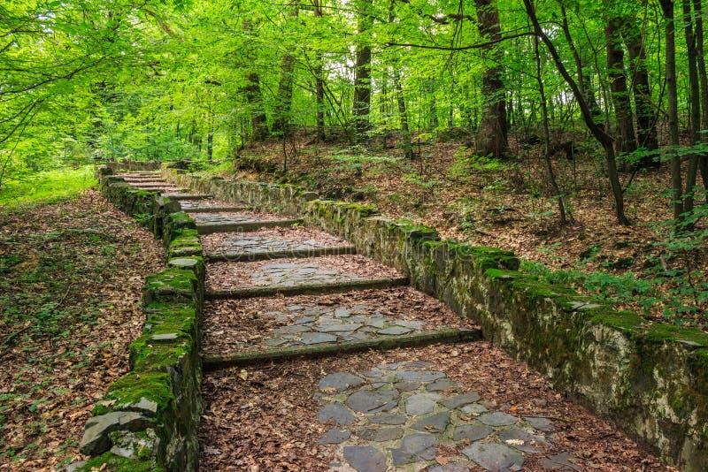 Winding stone steps with foliage horizontal royalty free stock images