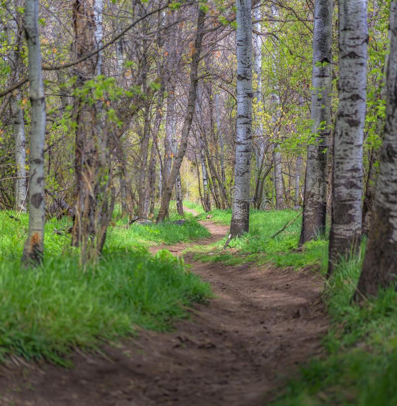 Winding Trail in Big Springs Park. Provo, Utah royalty free stock image
