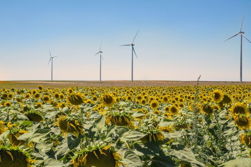 Windkraftanlage unter dem blauen Himmel mit Sonnenblume lizenzfreie stockfotos
