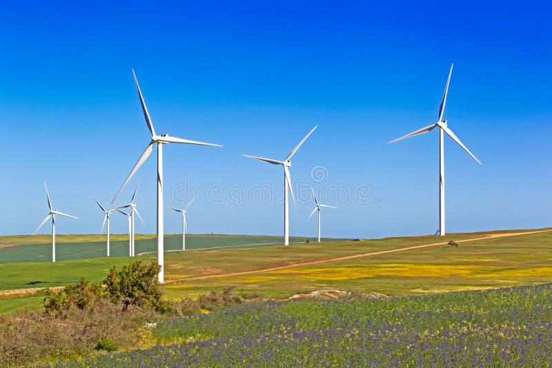 Windkraftanlagen auf den blühenden Gebieten im Frühjahr, Südafrika lizenzfreie stockfotos