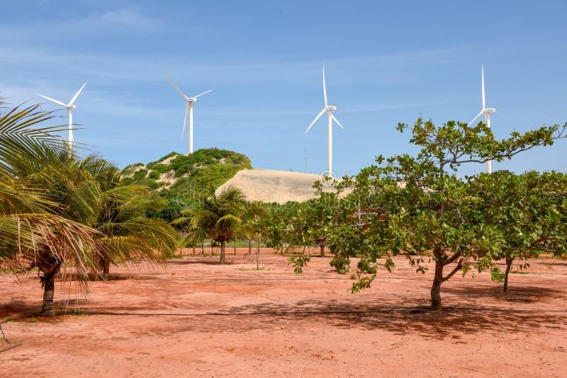 Windlandbouwbedrijf in Canoa Quebrada op Brazilië stock fotografie
