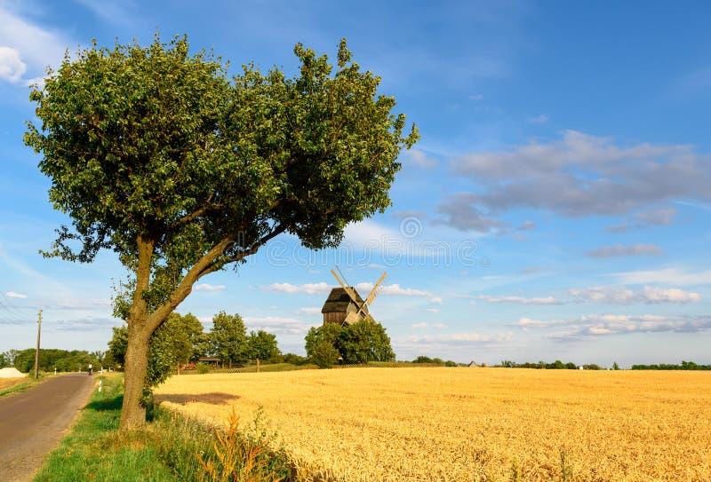 Windmühle auf einem Weizengebiet lizenzfreies stockfoto