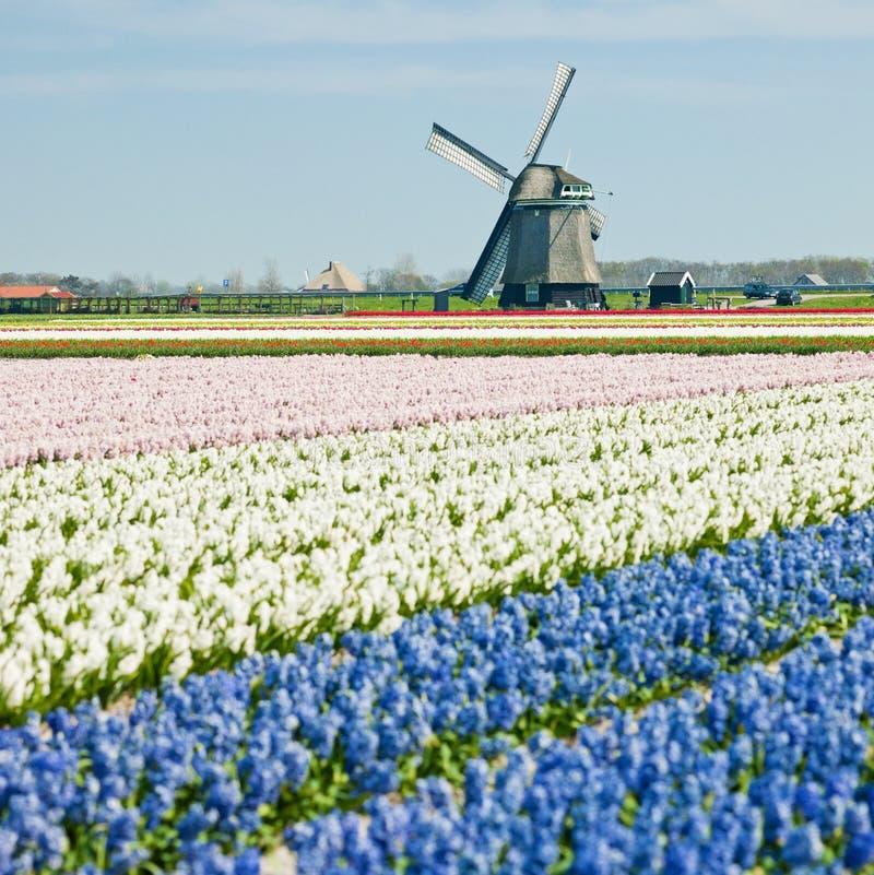 Windmühle, die Niederlande stockfotos