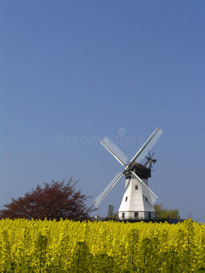Windmühle hinter Raps lizenzfreie stockfotografie
