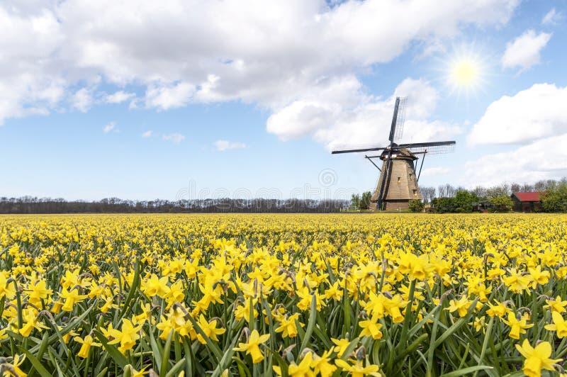 Windmühle am Narzissenbirnenbauernhof lizenzfreie stockbilder