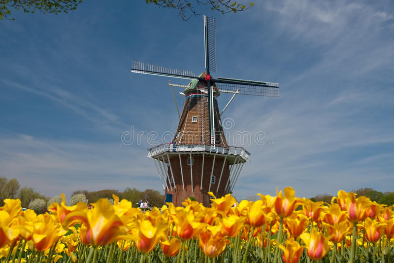 Windmühle und Tulpen lizenzfreies stockbild