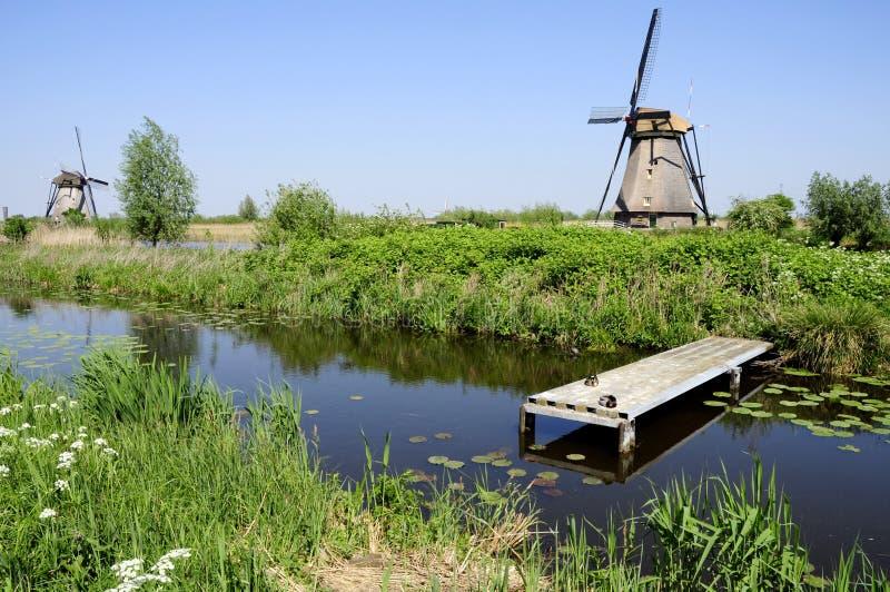 Windmühlen in der holländischen Landschaft lizenzfreies stockbild