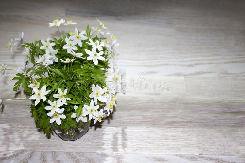 Windmill Anemone Flower - Bouquet Stock Photo - Image of green ...